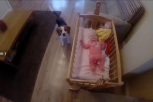 La bambina piange nel suo lettino…..ma il suo beagle sa cosa fare …( guardate video )