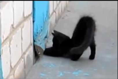 Un cane è bloccato dietro una porta Il suo amico gatto lo aiuta ( GUARDATE VIDEO BELLISSIMO )